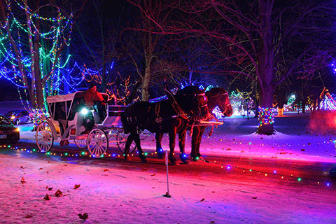 horse drawn carriage ride at the light show